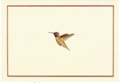 PP Notecard Pack Hummingbird Flight